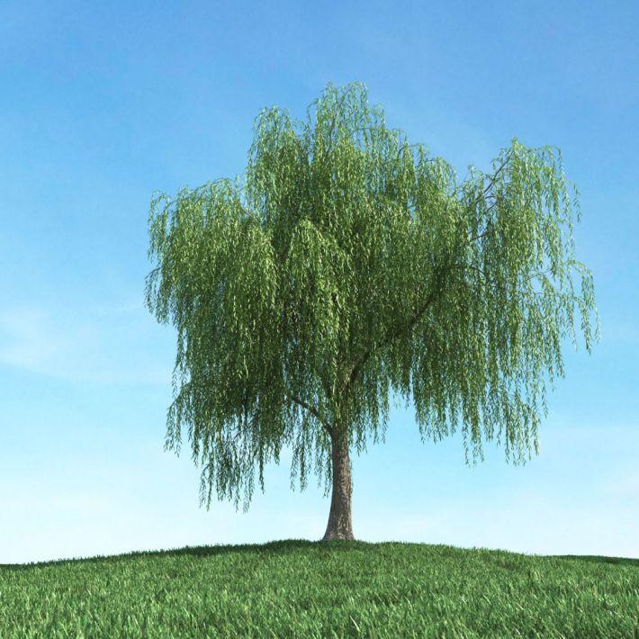 tree 16 am106