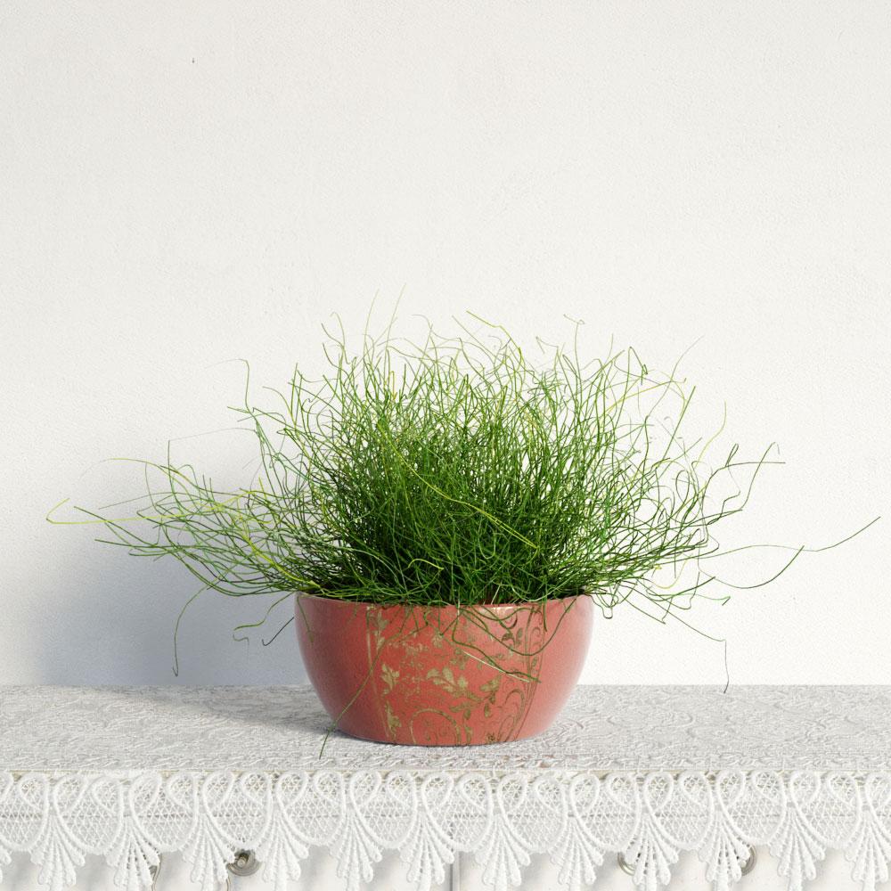 plant 48 AM141 Archmodels