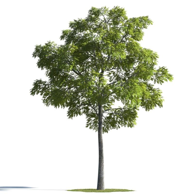 tree 98 AMC01