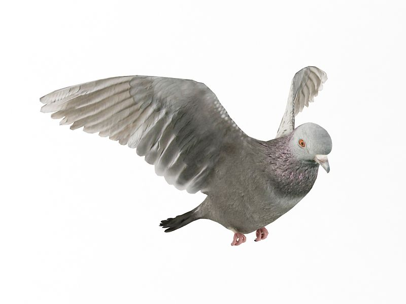 pigeon 13 AM83 Archmodels