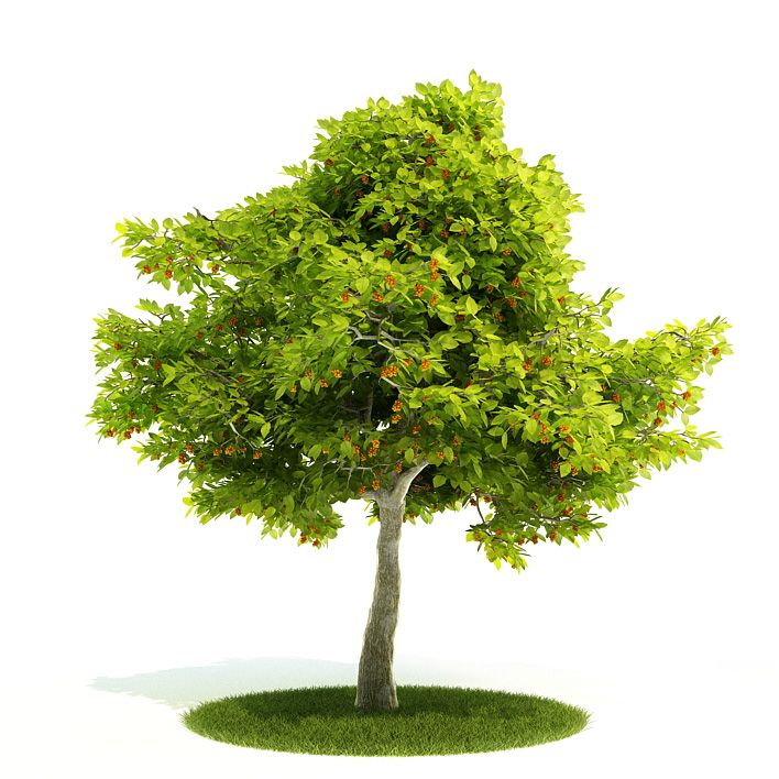 Plant 47 AM52 Archmodels