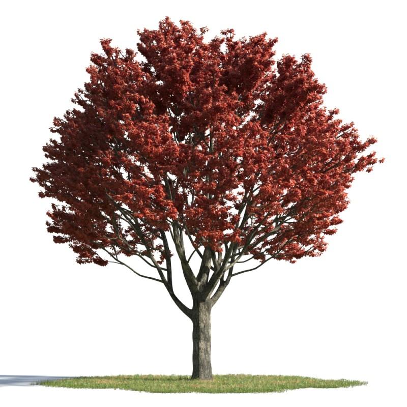 tree 27 AMC01