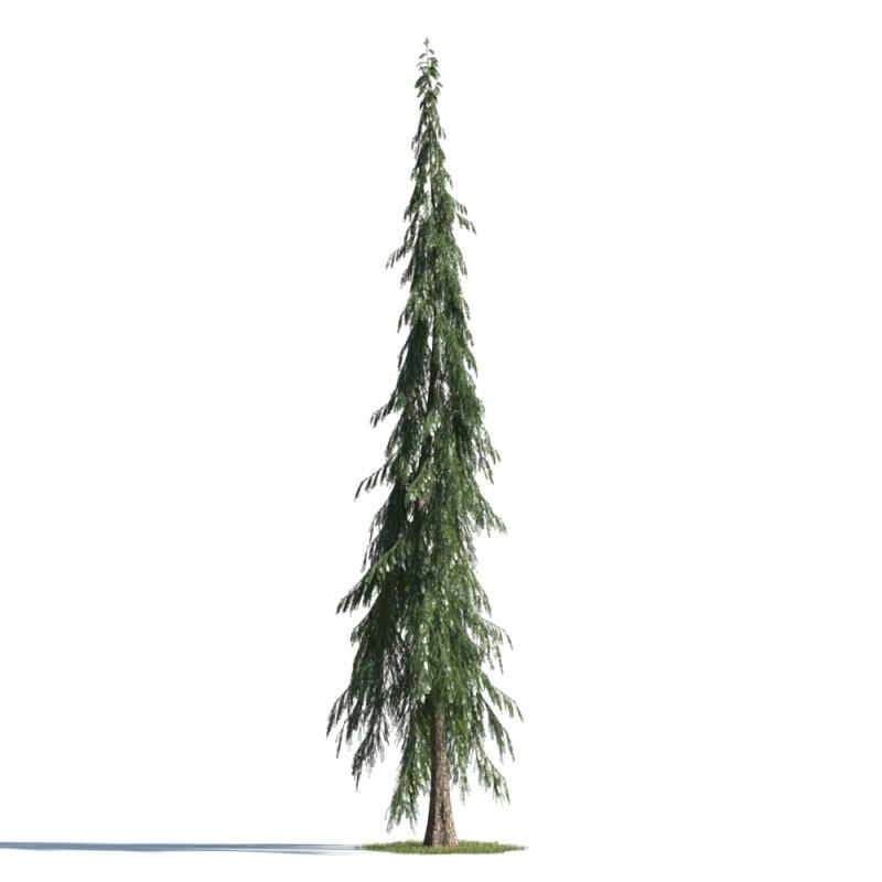 tree 71 AMC1