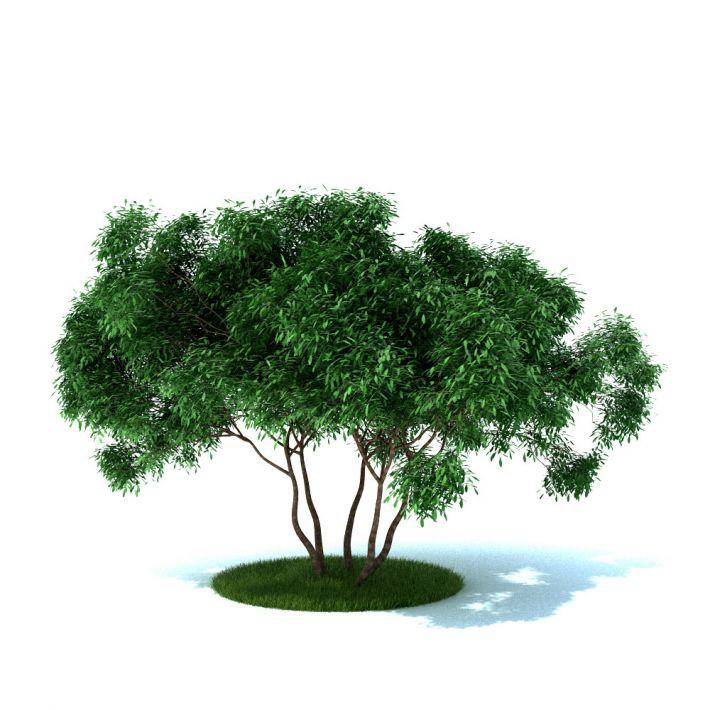 plant 36 AM105 Archmodels