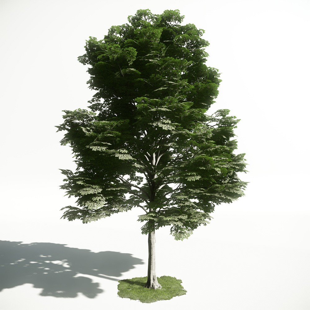 Tree 13 AM1 for CryEngine Archmodels