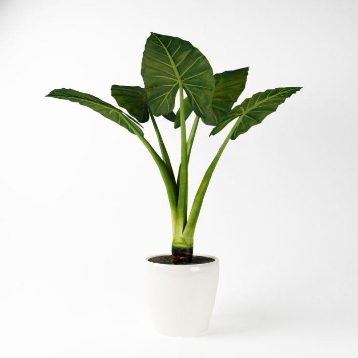 Plant 42 AM75 Archmodels