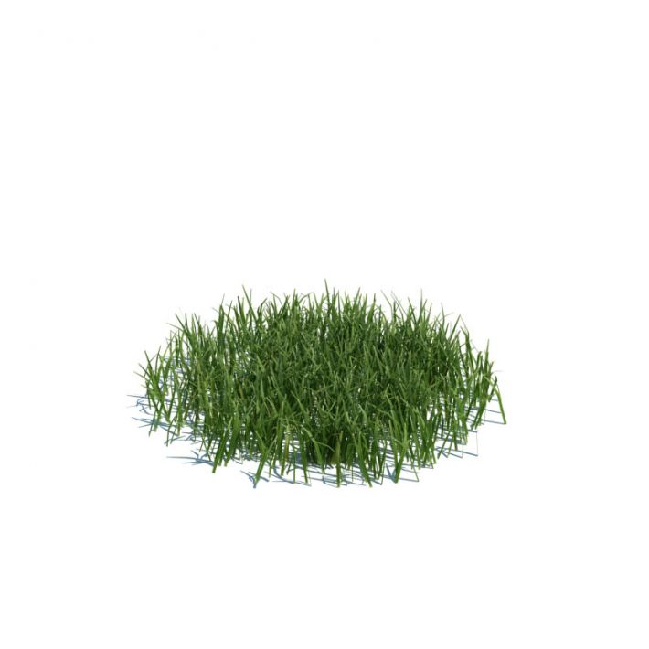 simple grass medium 104 am124
