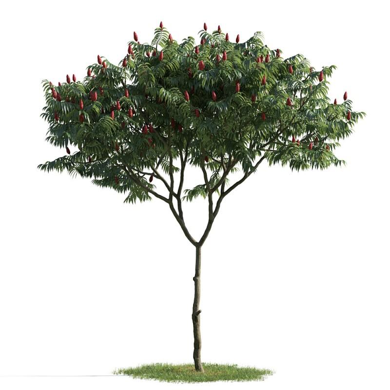 tree 5 AM163 Archmodels