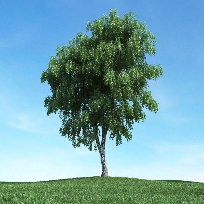 tree 30 AM117 Archmodels