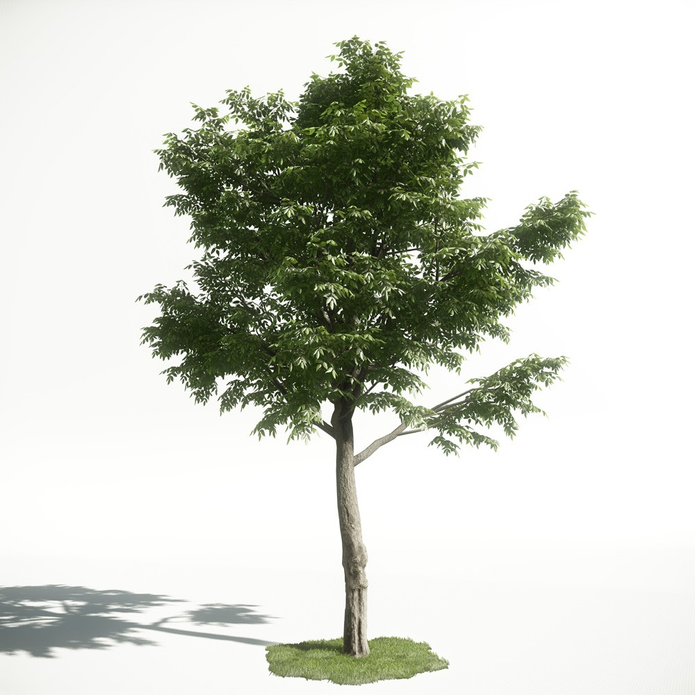 Tree 49 AM1 for CryEngine Archmodels