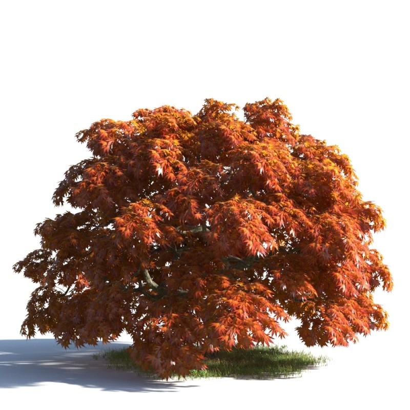 tree 37 AMC01