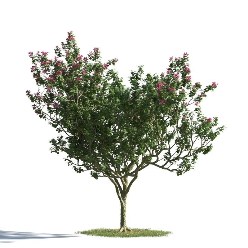 tree 6 AMC1