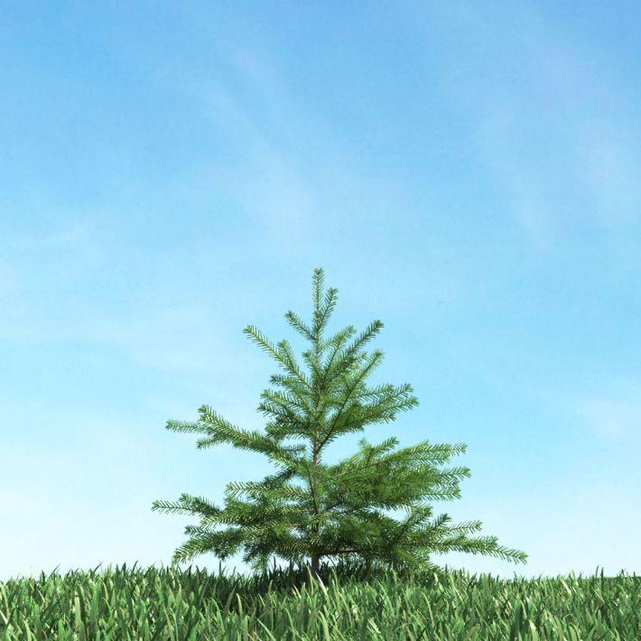 tree 51 AM117 Archmodels