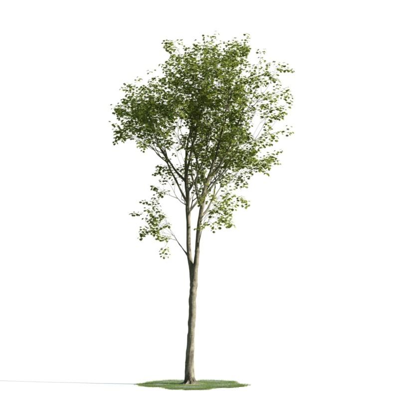 tree 21 am163