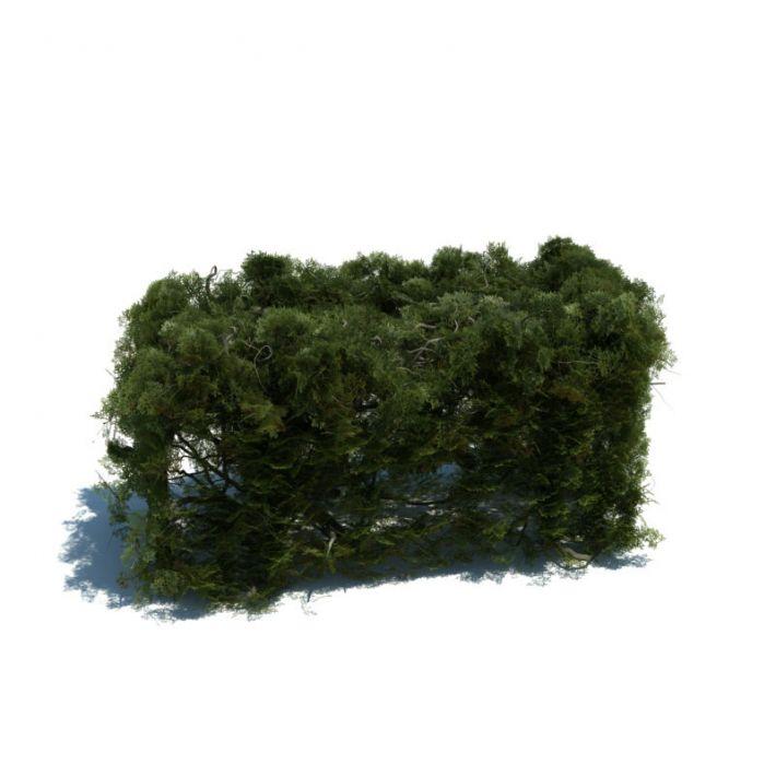 hedge 151 am126