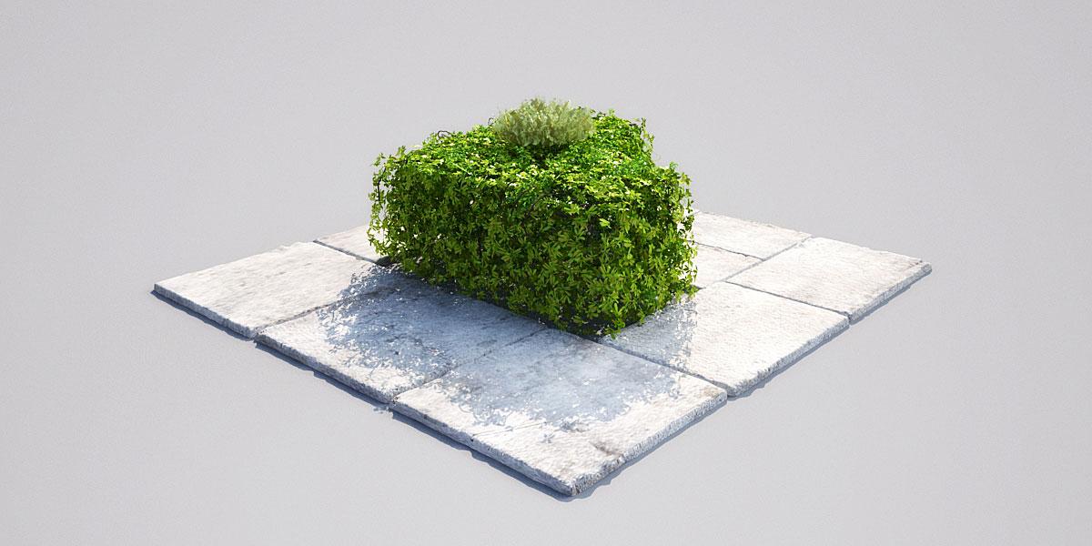 hedge 16_03 AM148