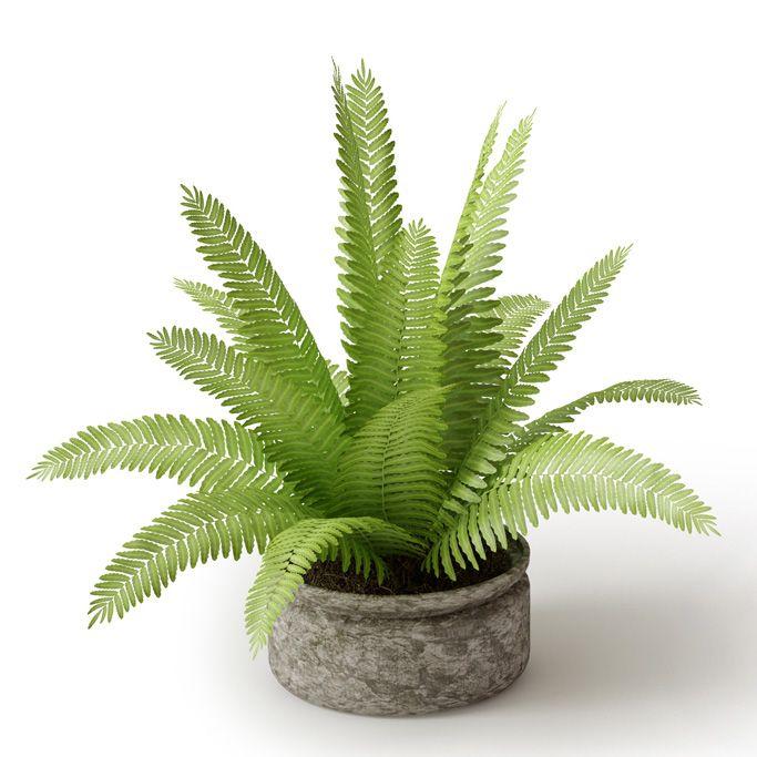 Plant 25 Archmodels vol. 66