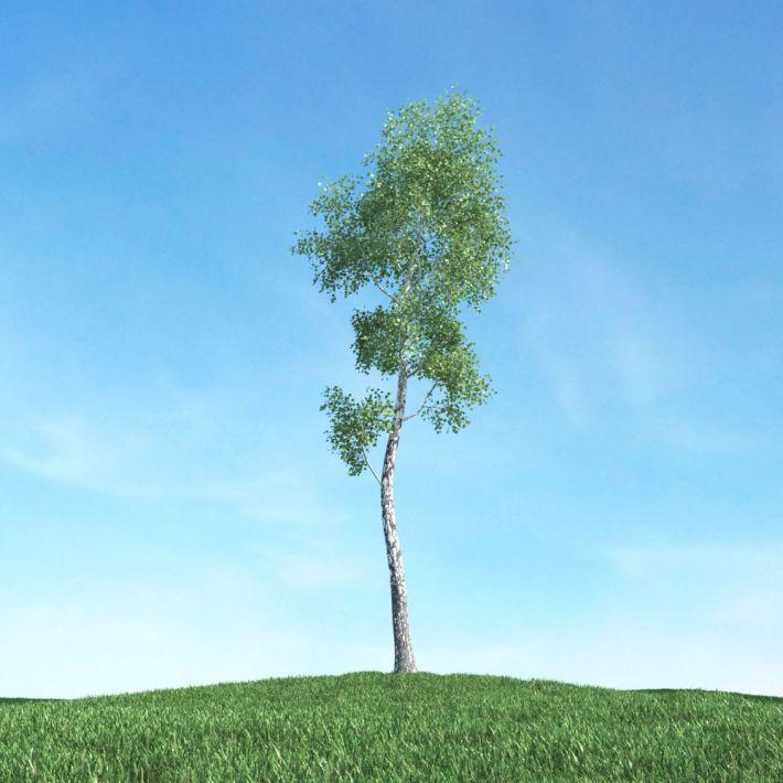 tree 24 am117