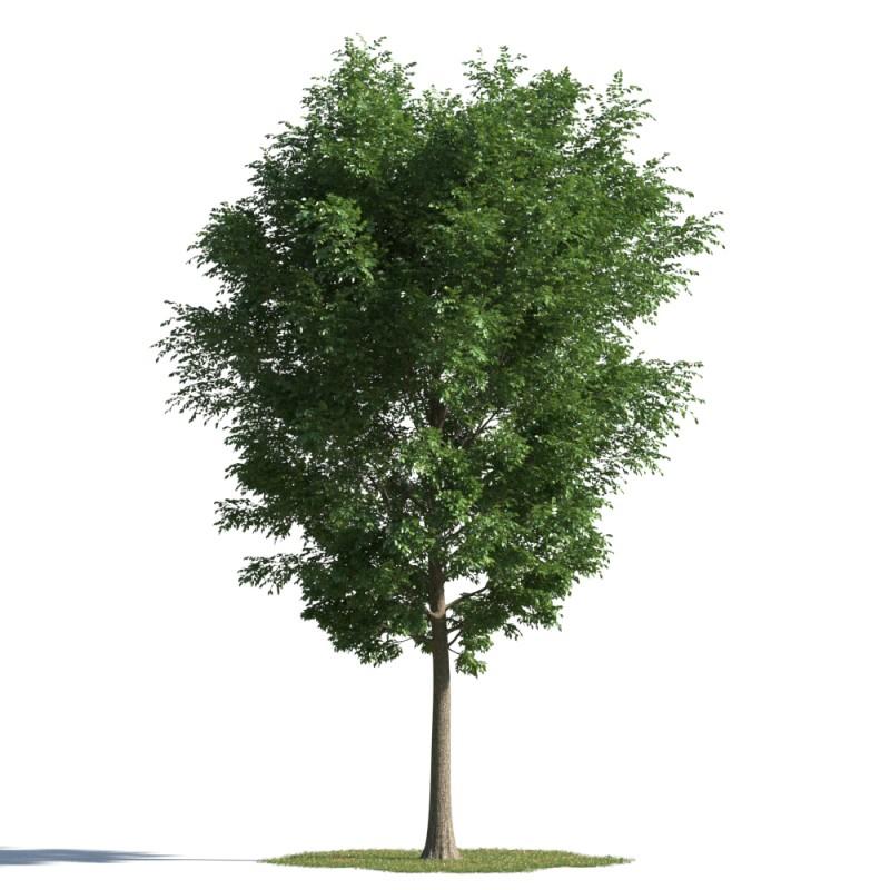 tree 45 AMC01