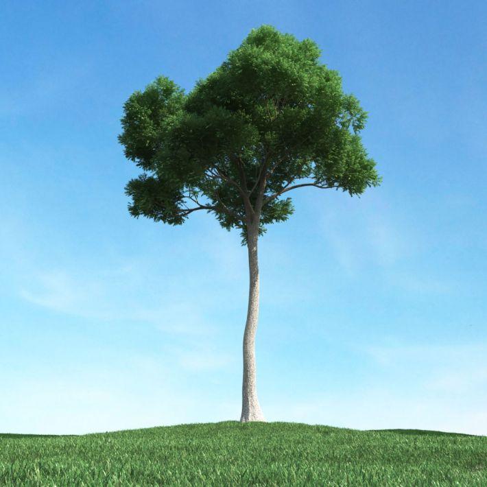 tree 25 AM106 Archmodels