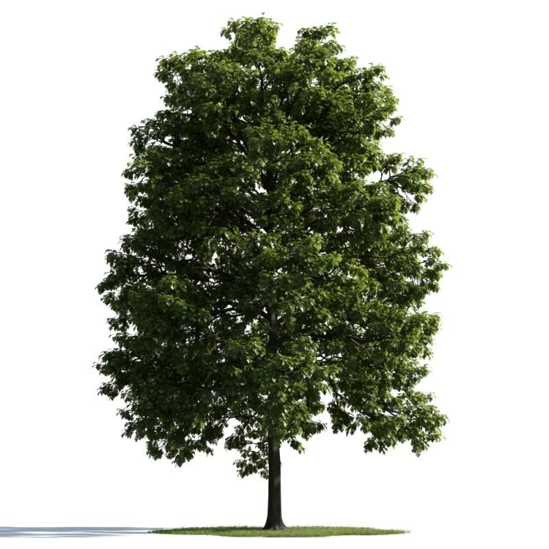 tree 32 am163