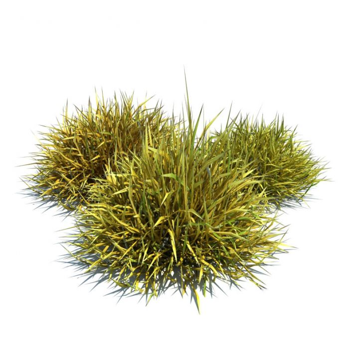 Ornamental grass png images galleries for Ornamental grass bed design
