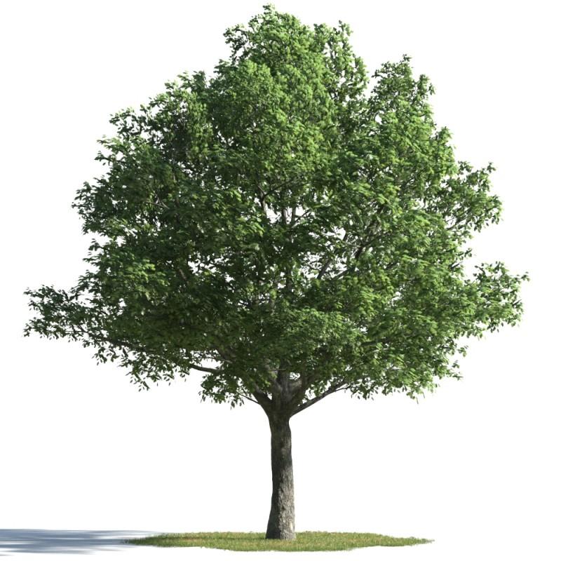 tree 29 AMC01