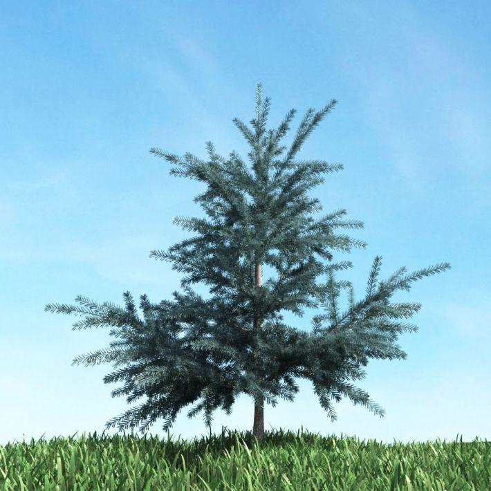 tree 54 AM117 Archmodels