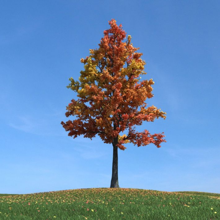 sweetgum tree 81 AM100 Archmodels