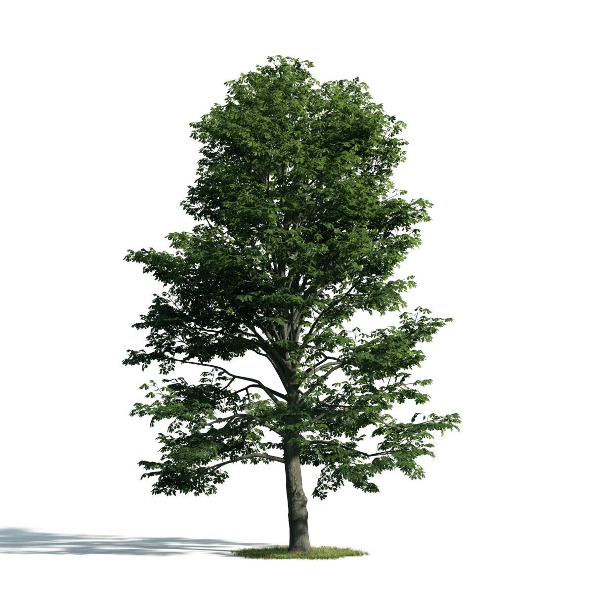 Tree 53 AM171 Archmodels
