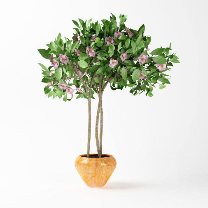 Plant 57 AM75 Archmodels