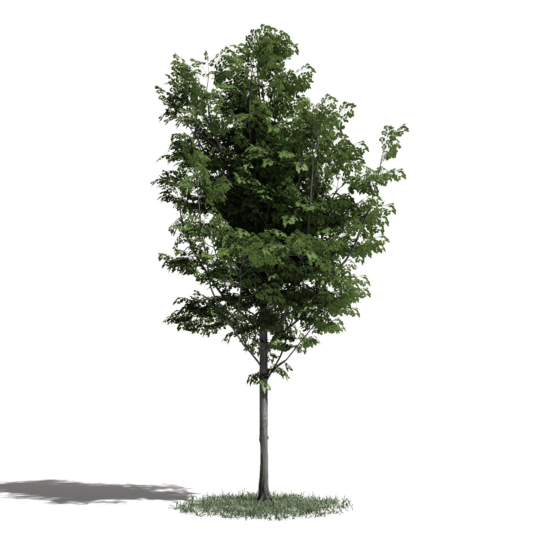 Tree 42 amb1