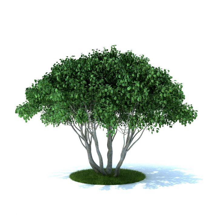 plant 34 am105