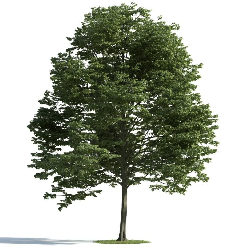 tree 10 AM163 Archmodels
