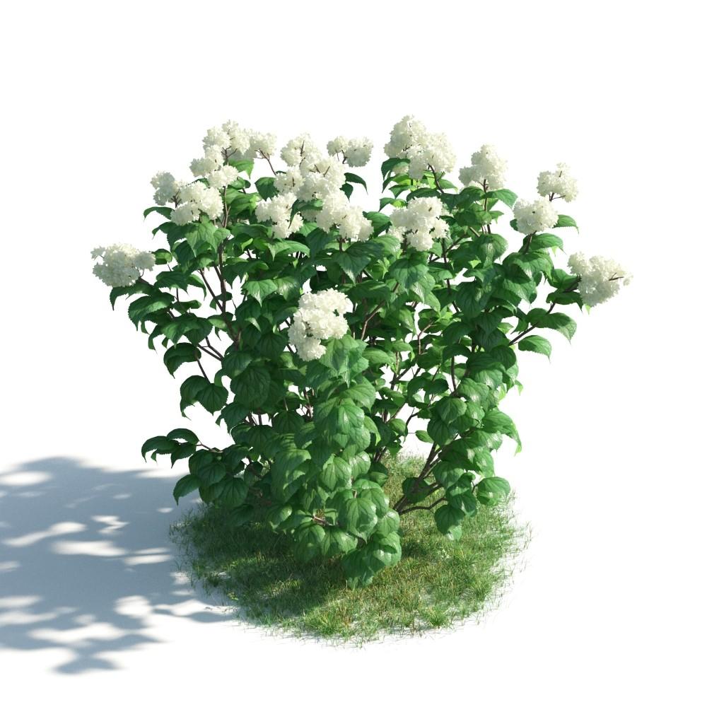 plant 27 AM183