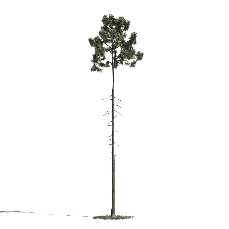 Tree 34 AM1 for Blender Archmodels