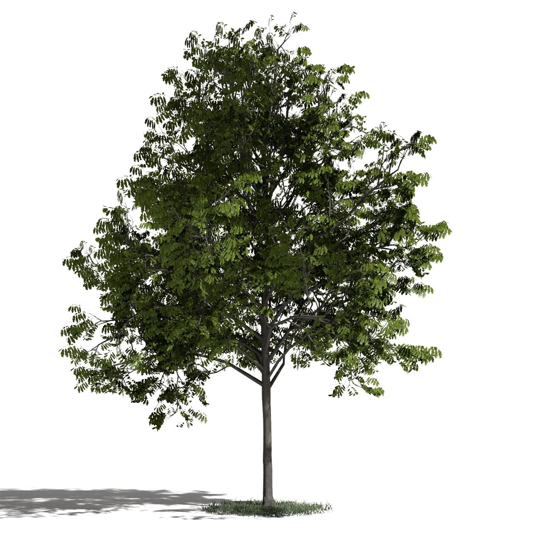 Tree 33 AM1 for Blender Archmodels