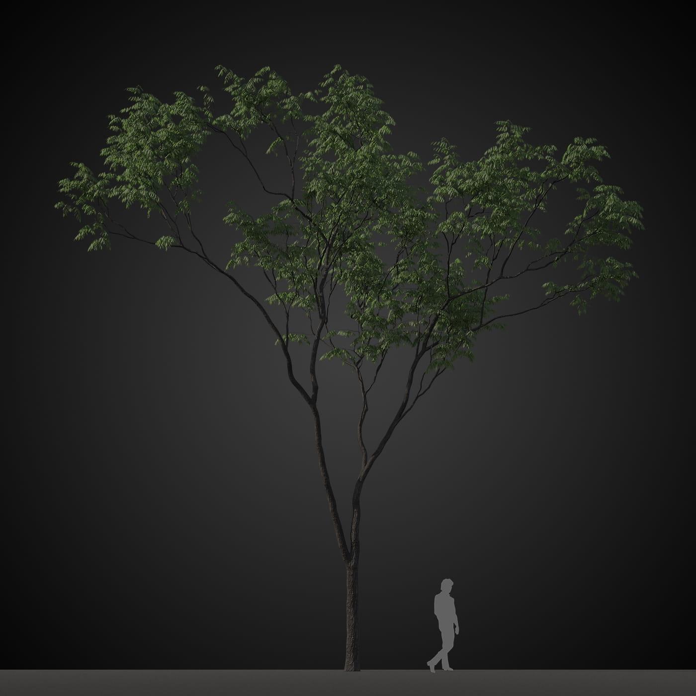 tree 1 AM207 Archmodels
