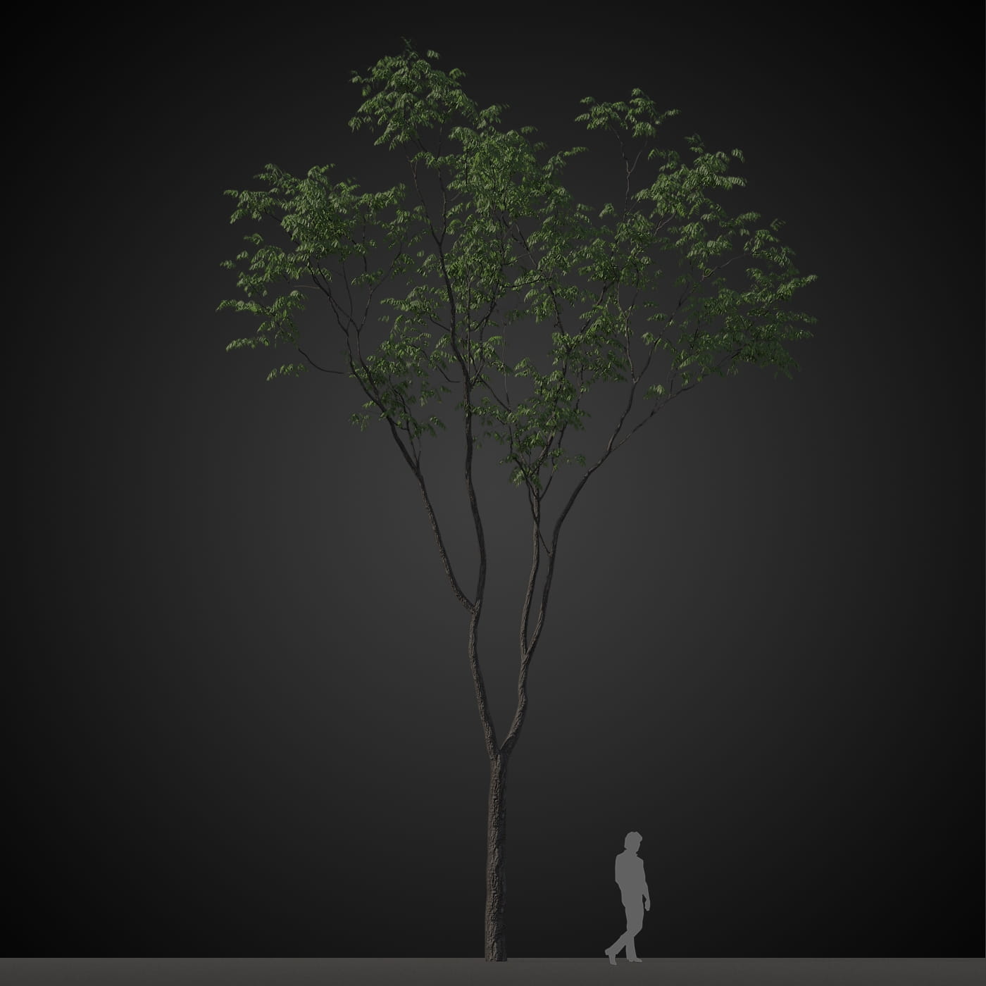 tree 2 AM207 Archmodels