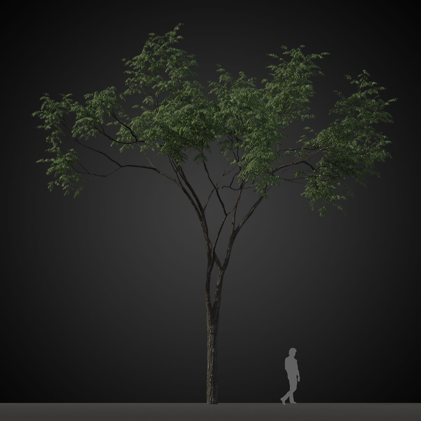 tree 3 AM207 Archmodels