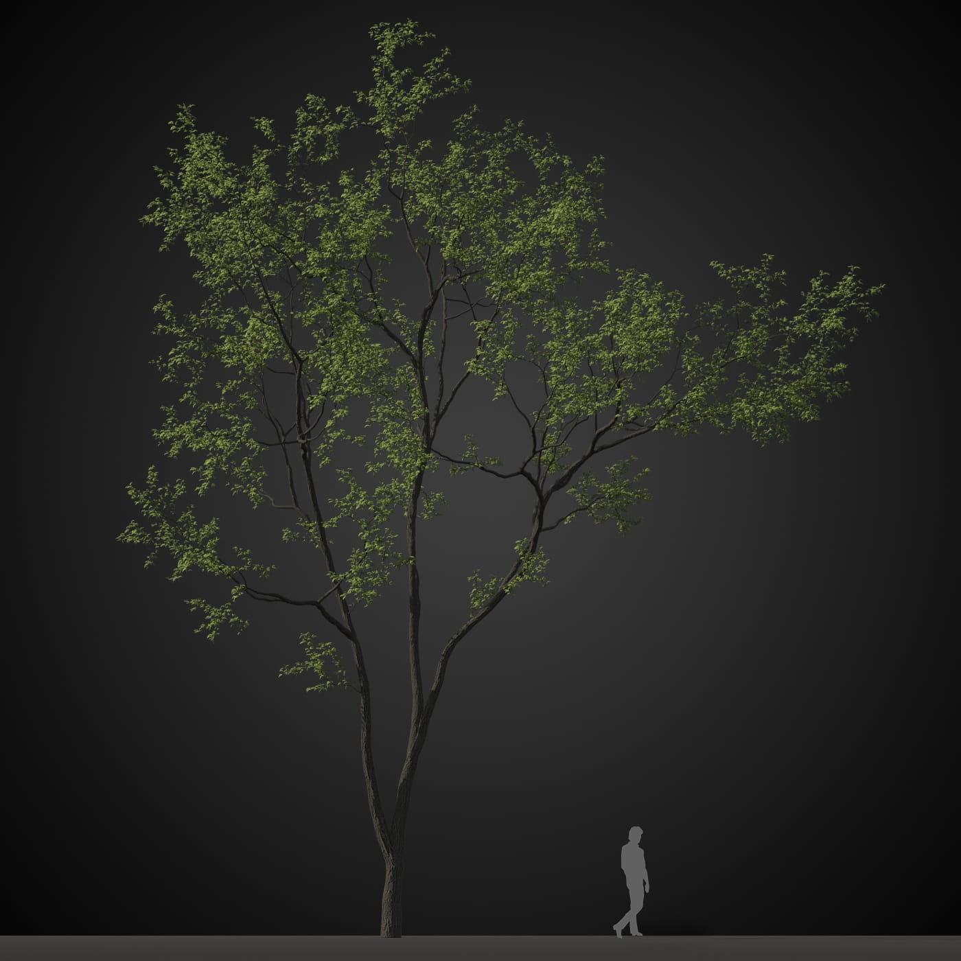 tree 5 AM207 Archmodels