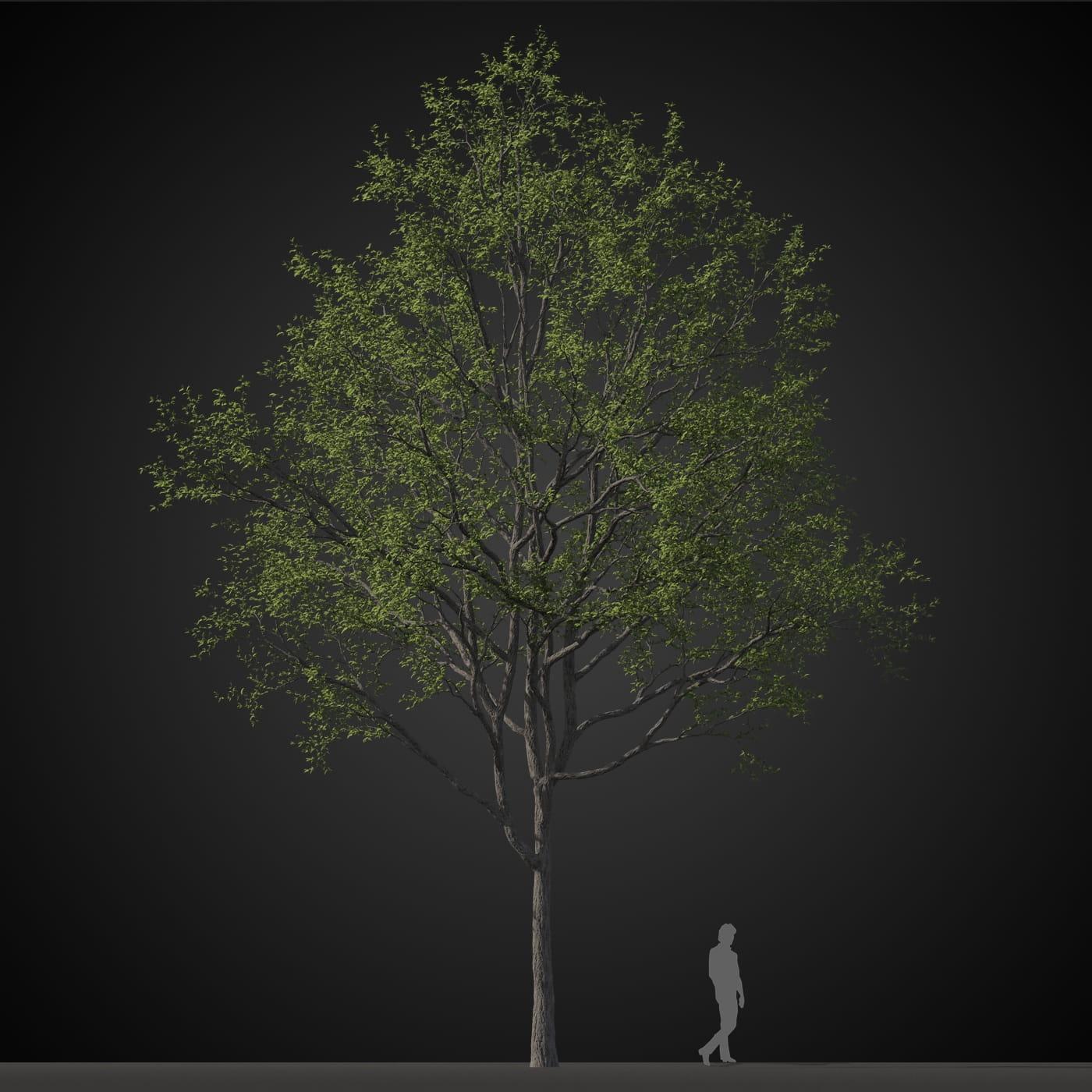 tree 8 AM207 Archmodels