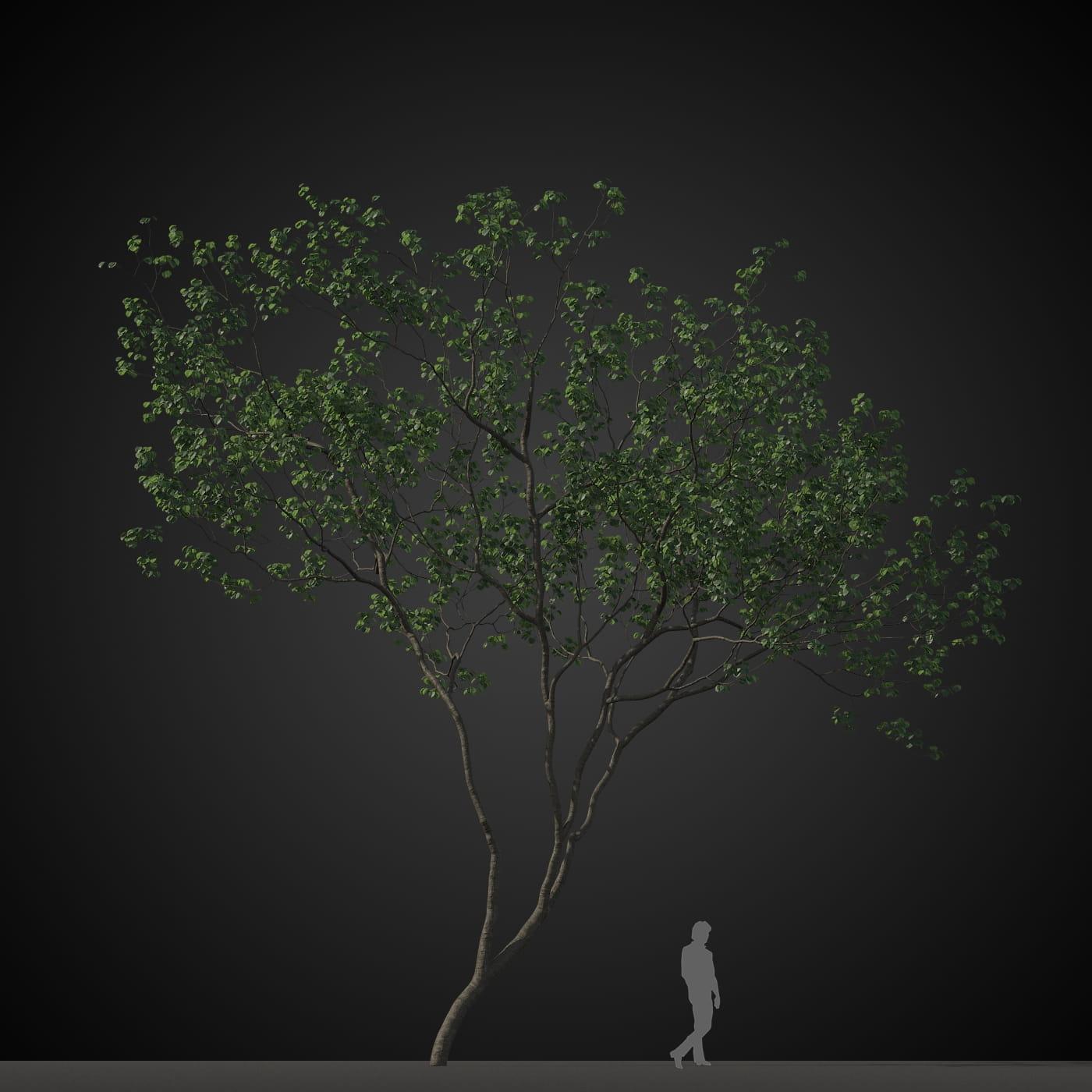 tree 9 AM207 Archmodels
