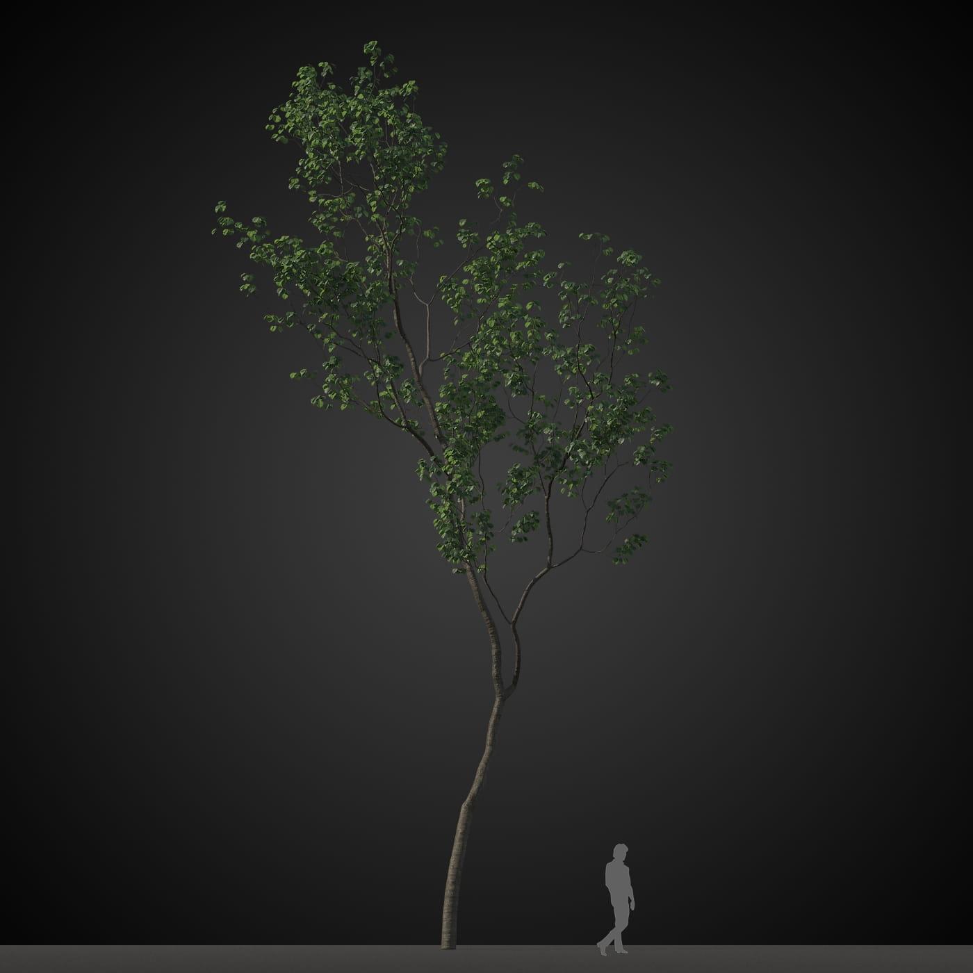 tree 10 AM207 Archmodels