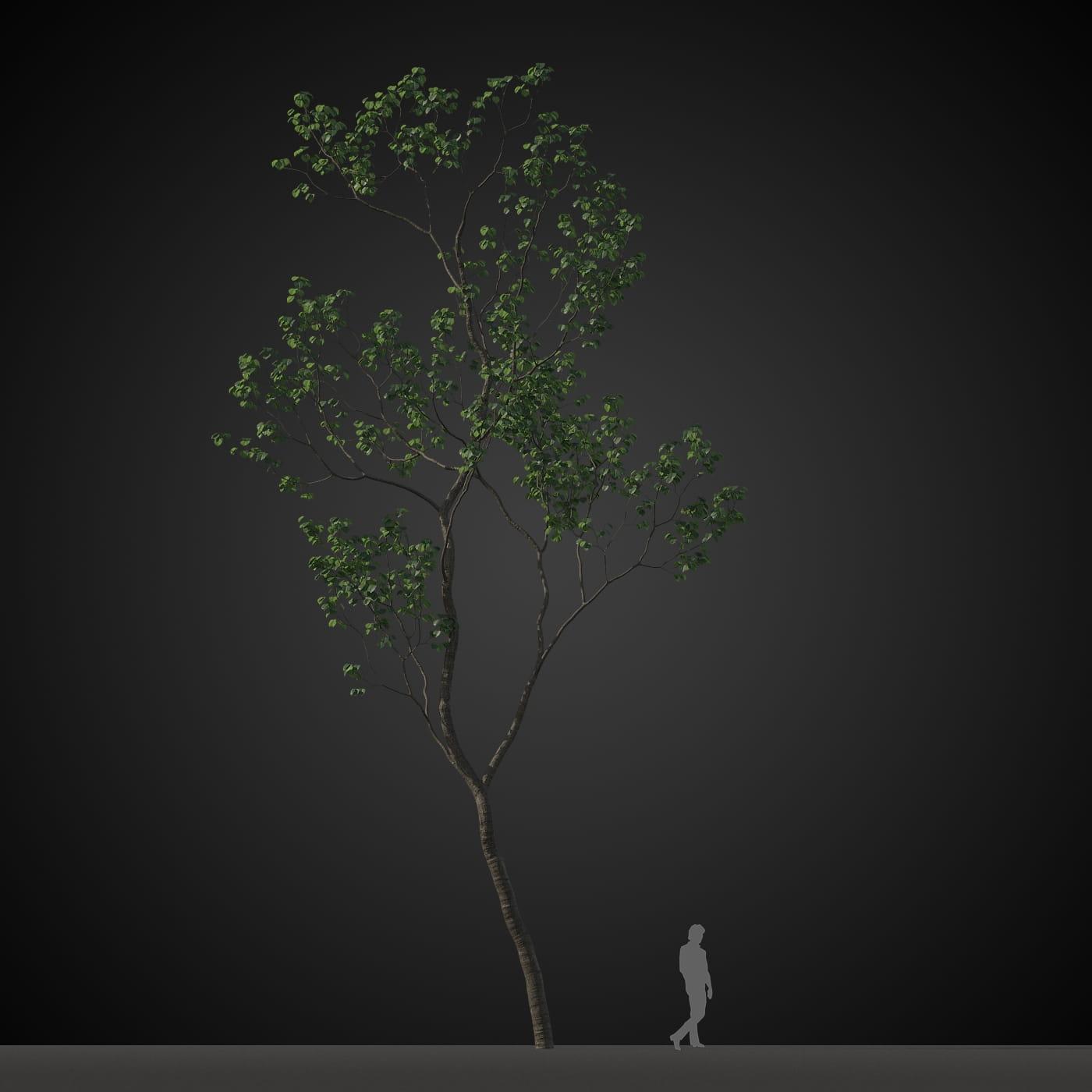tree 11 AM207 Archmodels