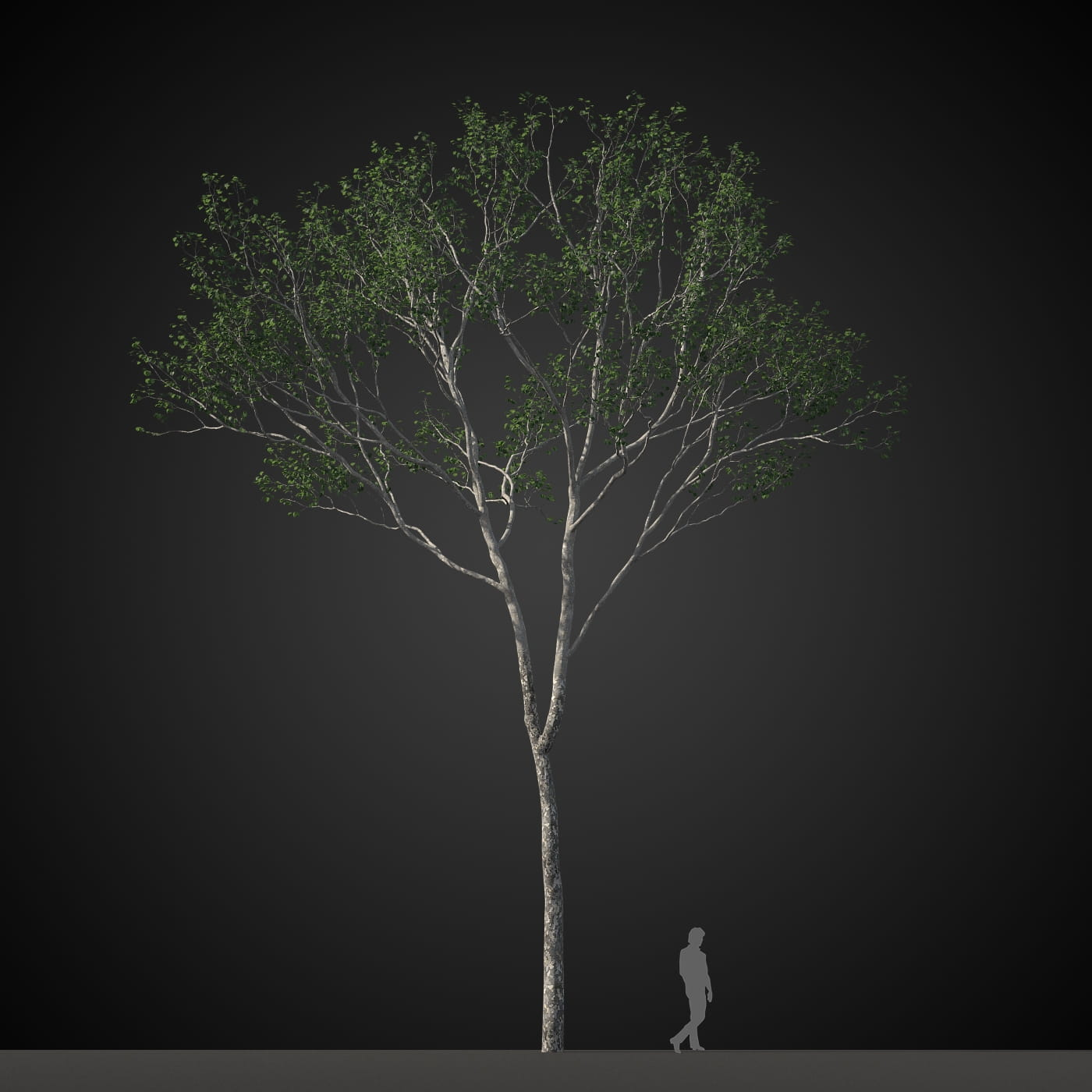 tree 12 AM207 Archmodels