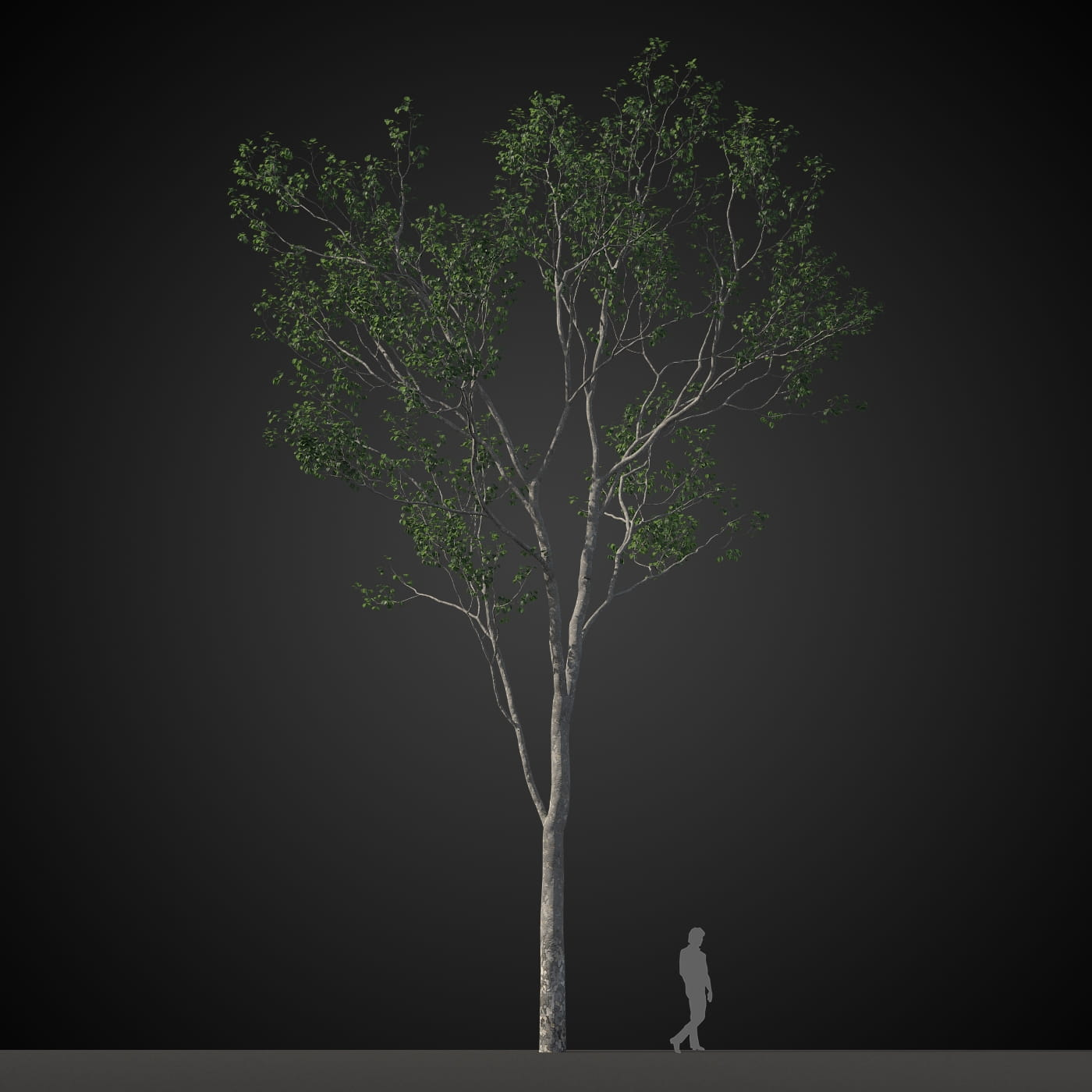 tree 13 AM207 Archmodels