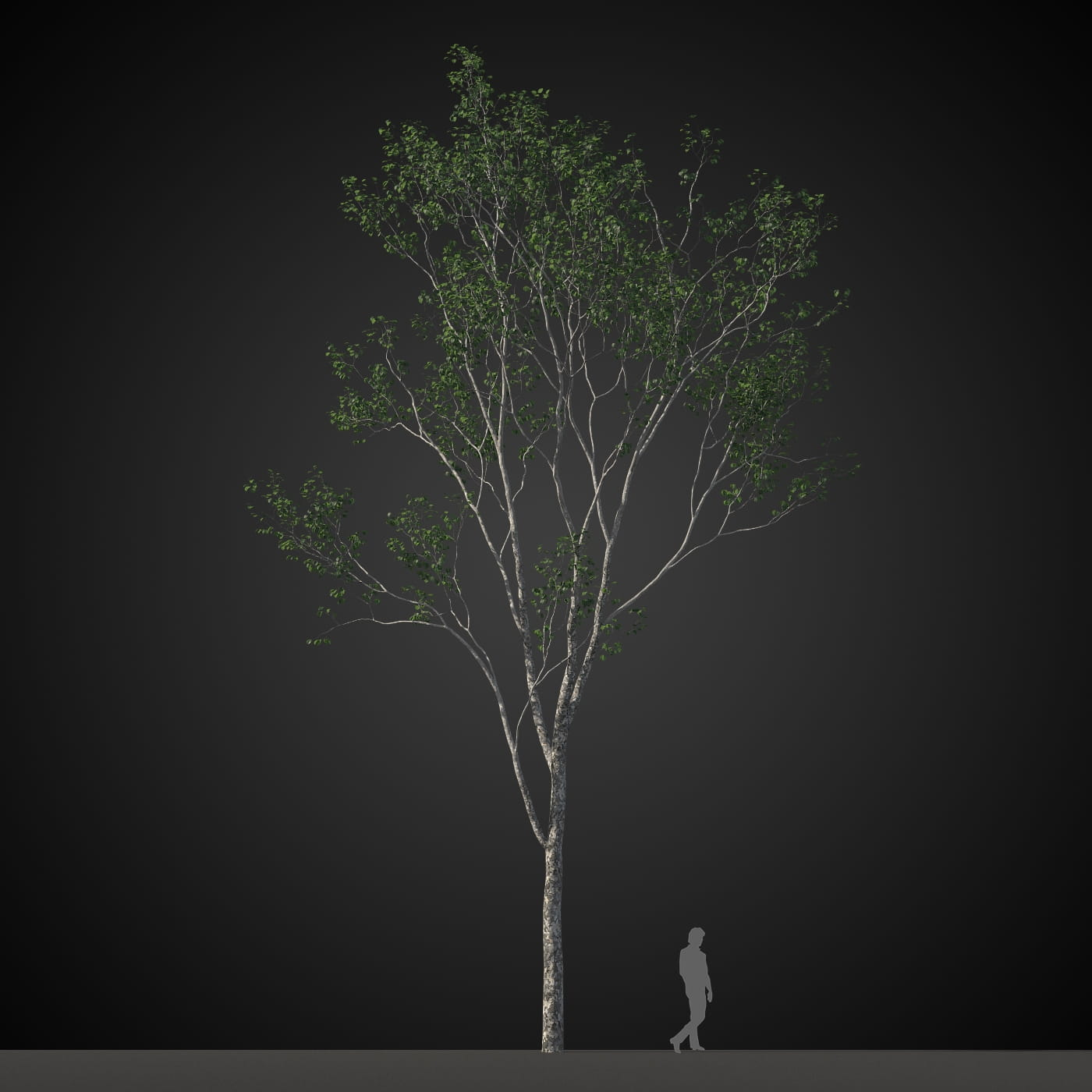 tree 14 AM207 Archmodels
