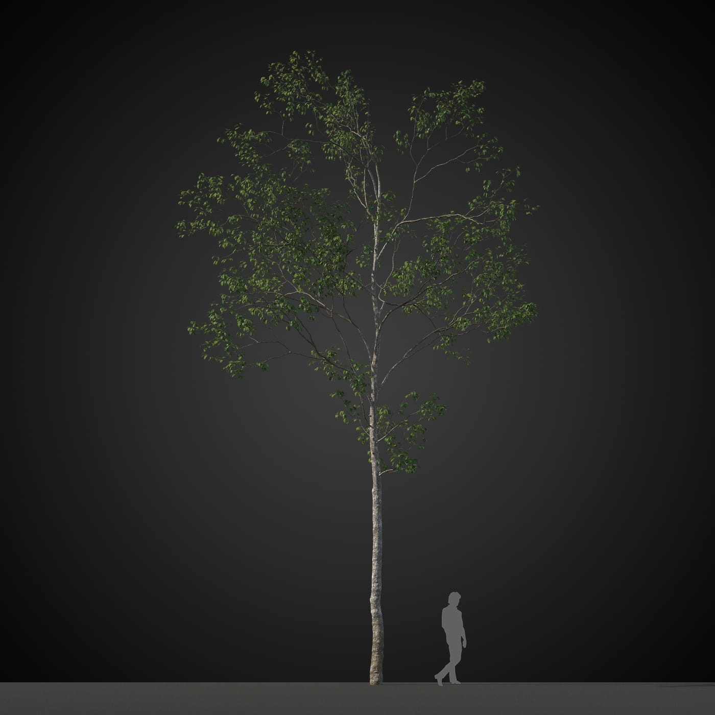 tree 15 AM207 Archmodels
