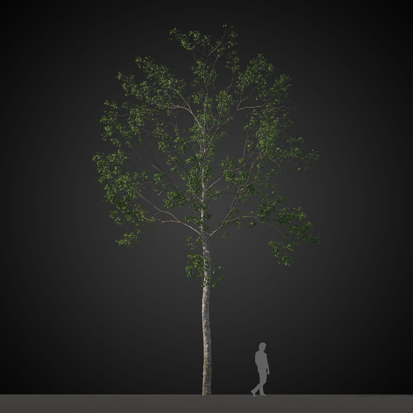 tree 16 AM207 Archmodels